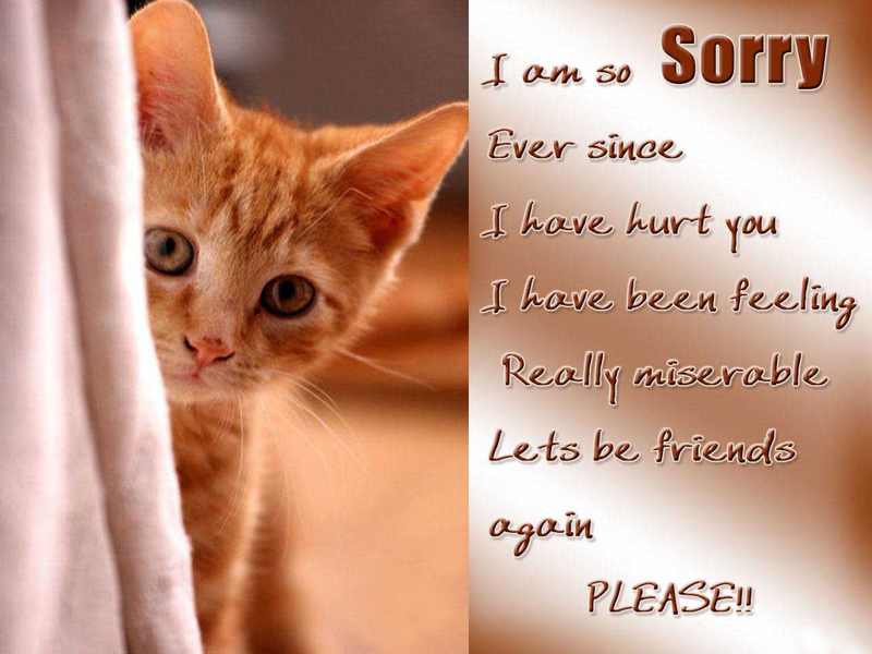im sorry messages for friends