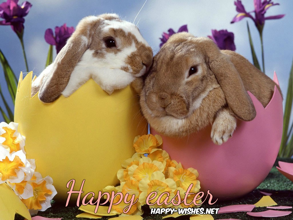 easterbunnyimages
