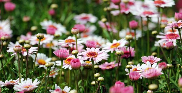 nature quotes about flowers