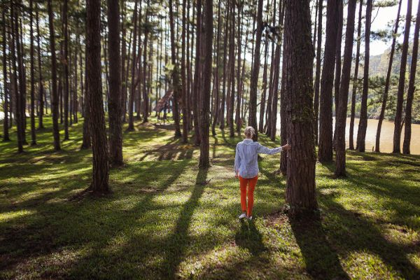walk in forest
